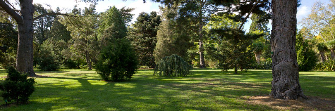 Botanic Gardens Wedding locations 1003097 Pinetum 4