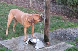 Horseshoe Lake dog park drinking fountain thumbnail