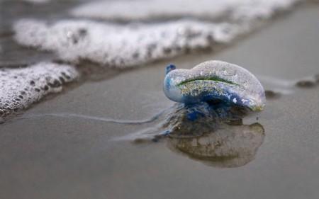A blue bottle washed up on the beach.